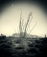 ocotillo Superstitions pano 20131213 00gs